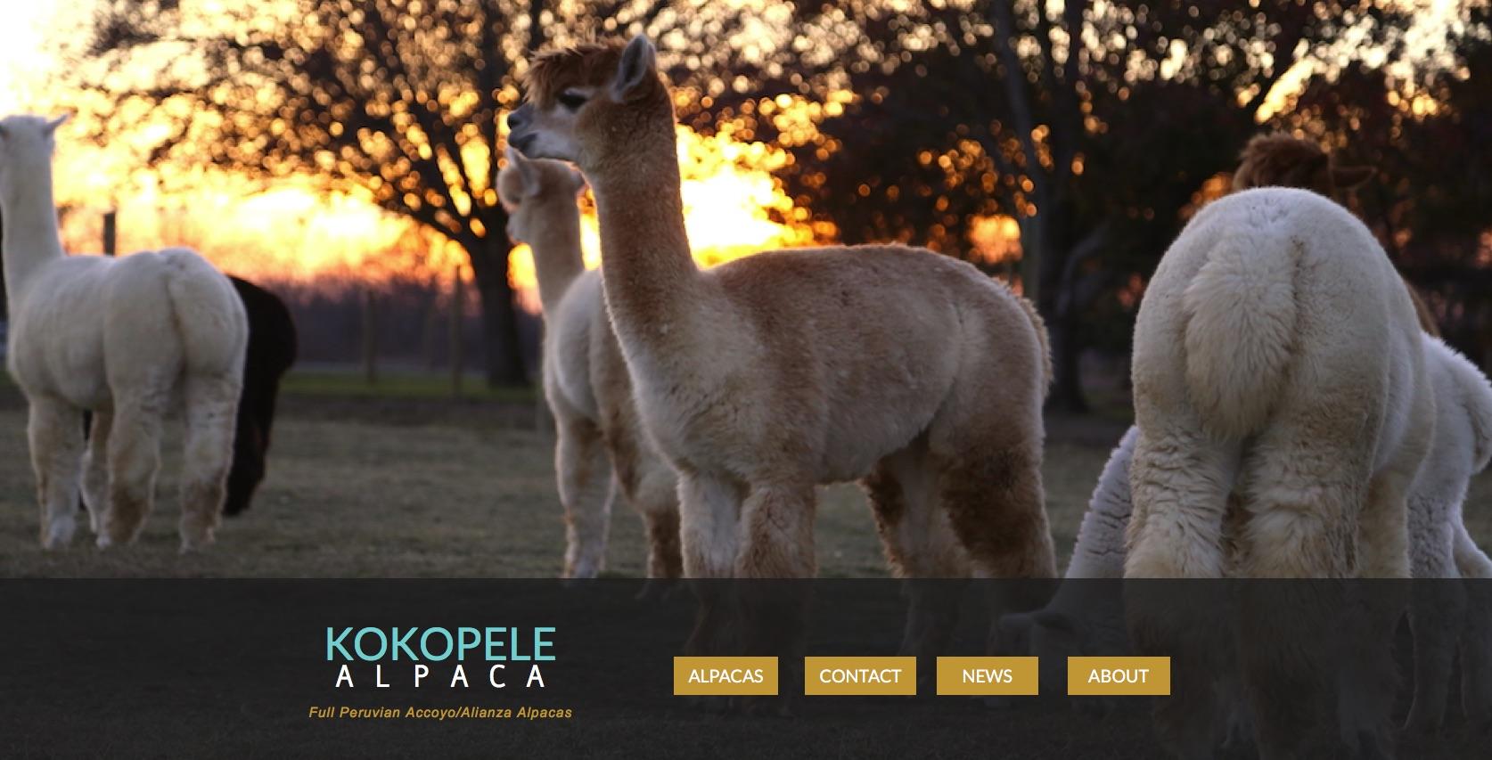 Alpaca Farm Web Development